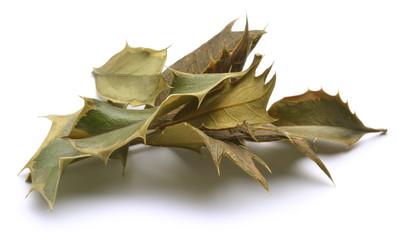 Ilex aquifolium Christmas holly Падуб остролистный