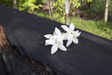 White colored Indian cork flower on the bench