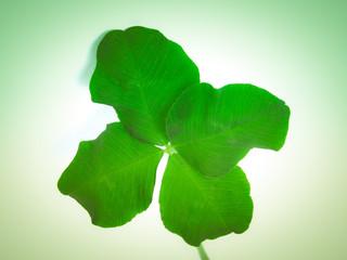 Retro look Four leaf shamrock
