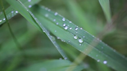 Close up of grass with rain drops macro. HD. 1920x1080