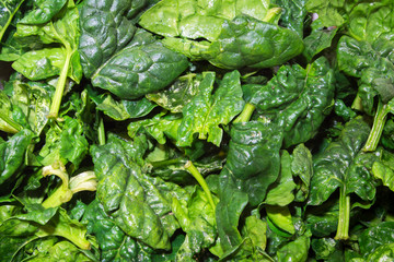 closeup of fresh spinach