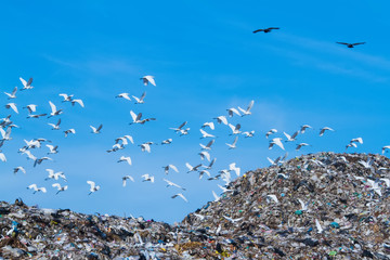 Bird on mountain of garbage