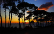 Colorful sunset in the pine forest
