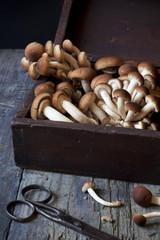 mushrooms on vintage wooden box on rustic table
