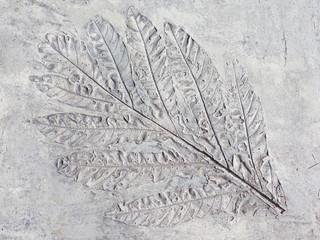 mark sheet plants