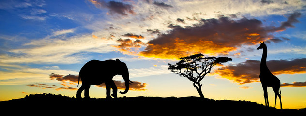elefante  y jirafa cara a cara