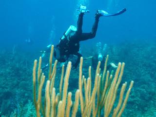 Cuba, scubadivers undersea