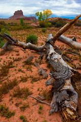 Fallen Tree Utah Desert Wild Horse Butte in the Background