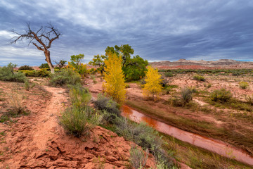 Muddy Creek and Autumn Foliage - Utah Fall Landscape