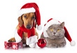 canvas print picture - dog and cat wearing a santa hat