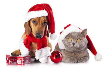 dog and cat wearing a santa hat
