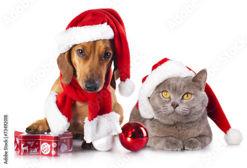 canvas print picture dog and cat wearing a santa hat