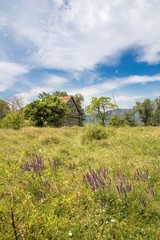 meadow in the banat romania