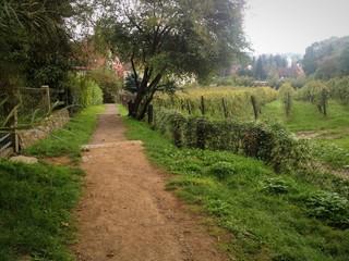 Wanderung am Weinberg Radebeul
