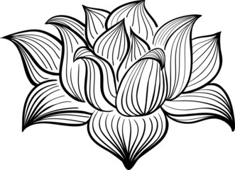 Vector Black and White Lotus flower