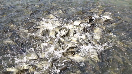 Many fish in the river