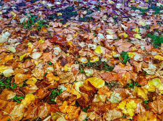 Autumn leaves on the street