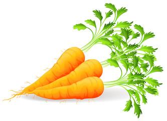 Nutritious carrots
