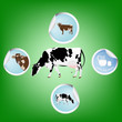 Milk.Cow.Fresh dairy bio product