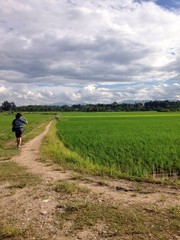 a traveller at jasmine rice field