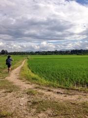a traveller at jasmine rice field