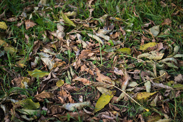 Withered autumn leaves. Shallow depth of field.