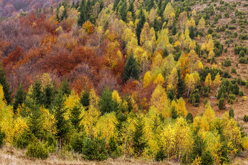 Autumn season hillside, covered with colorful trees