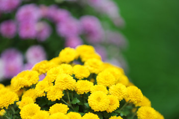 Yellow and lilac flowers on green background