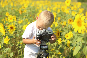 baby photographer in the field of sunflowers