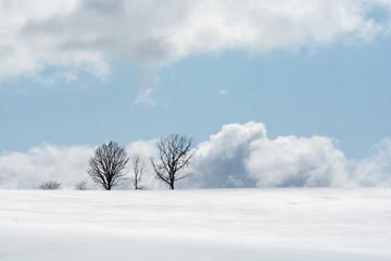 雪原の丘に立つ木