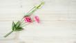 eustoma flower on wooden surface
