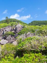 rainforest Seychelles