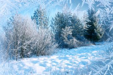 Winter background, landscape. Winter trees in wonderland. Winter