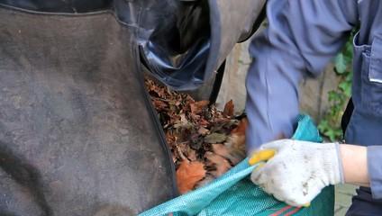 Herbstlaub, Mann füllt Laub mit den Händen in Abfallbeutel