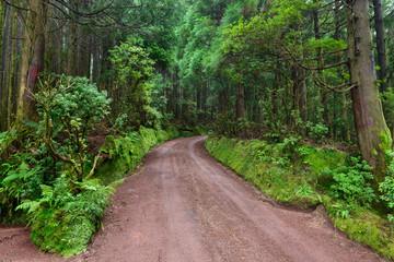 Caminhos florestais dos Açores