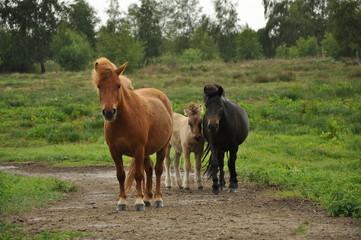 paarden op een pad