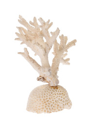 isolated white coral branch