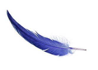 bright blue single isolated feather