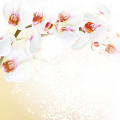 Floral vector background with realistic orchid flowers