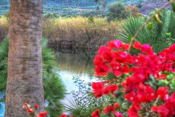 glimpse of Temo river, Sardinia