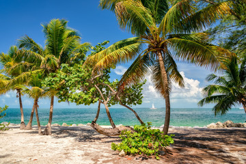 Palm beach. Palm trees on a beach, the sea.