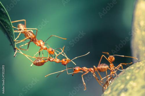 Leinwandbild Motiv Ant bridge unity