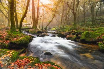 Misty Autumn Woods