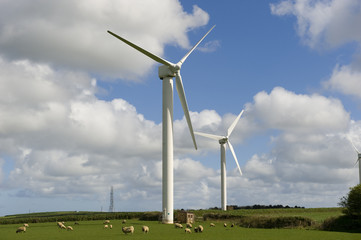 Sheep graze in front of wind turbines in Cornwall, UK.