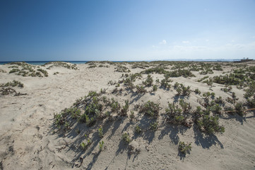 Desert bushes on coastal sand dune