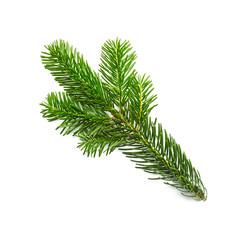 fir branch on white