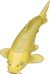 Vector golden carp fish.