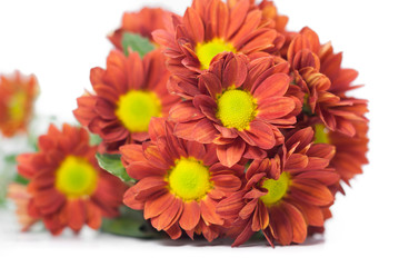 bouquet of chrysanthemums isolated on white background