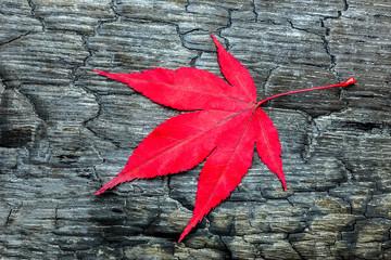 Red maple leave on black burnt wood