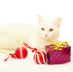 cat, christmas, christmas tree, santa claus hat